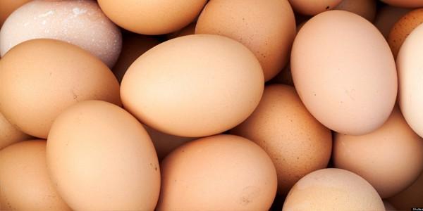 egg666
