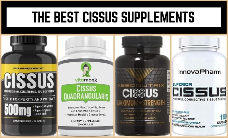 The Best Cissus Supplements